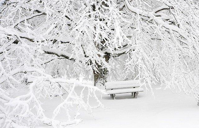 zasněžený strom, lavička