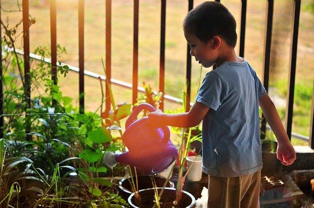 Zalévání rostlin