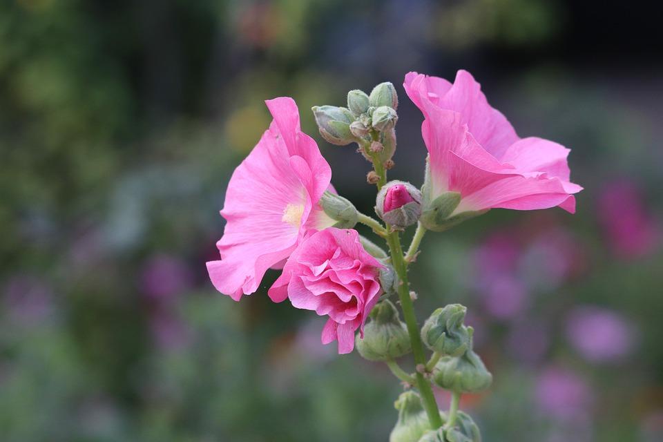 květ rostliny