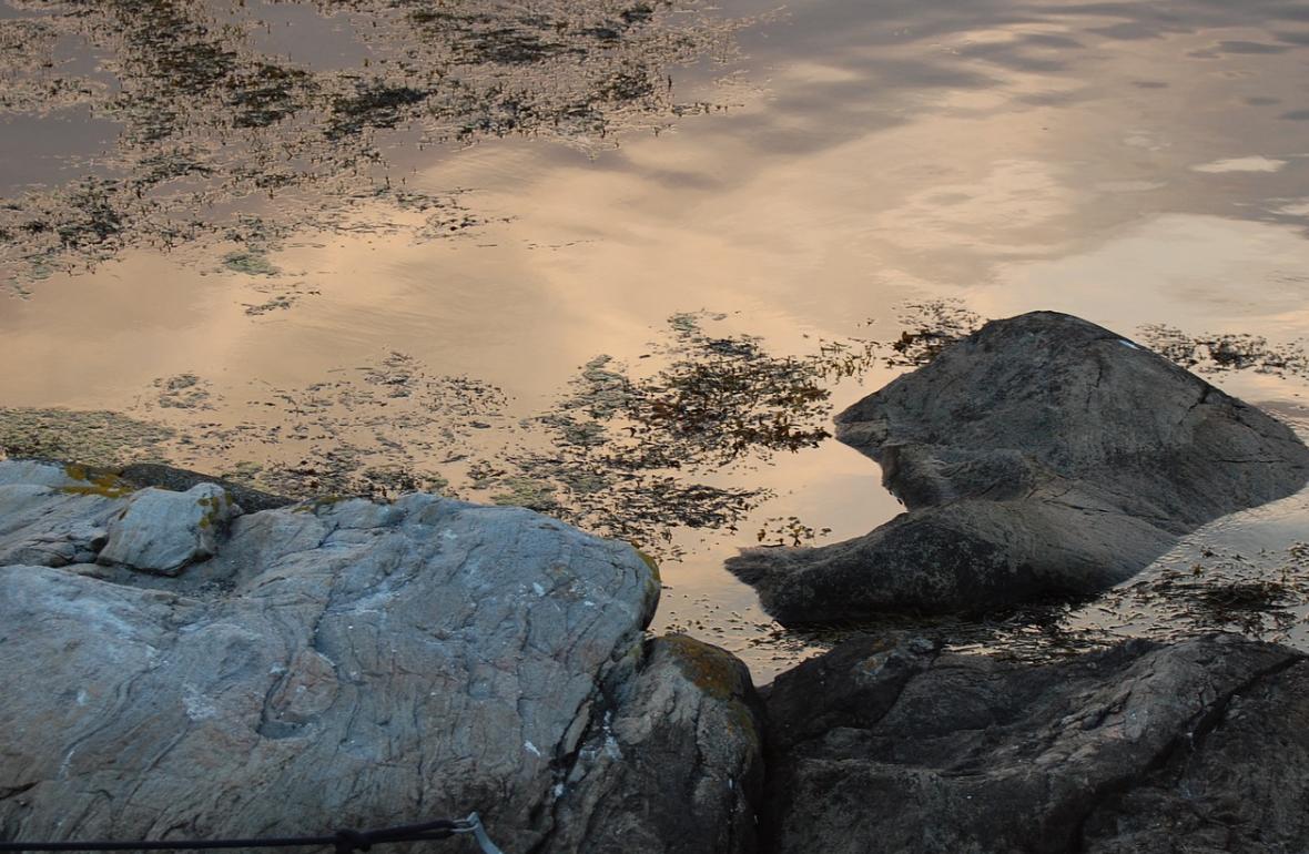 mořská kelpa